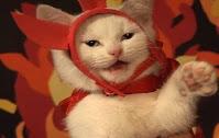 Disfraces de Halloween para gatos