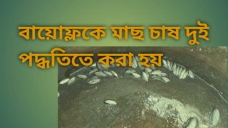 বায়োফ্লকে মাছ চাষ দুই পদ্ধতিতে কারা হয়? Biofloc Fish Framing (পর্ব ৫)