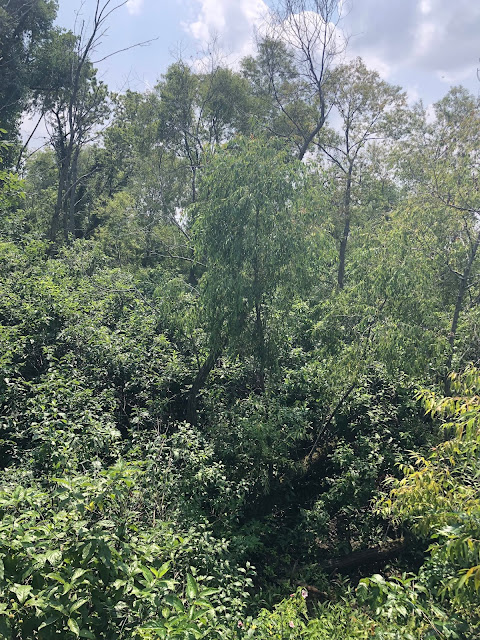 A peek at the preserve from the overlook at Magee Marsh.