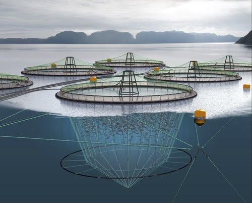 Fishing Net and Aquaculture Cage have gained prominent demand with rising consumption of seafood across the globe