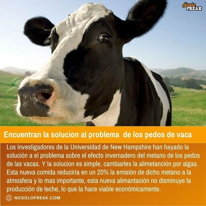 Encuentran la solucion al problema de los pedos de vaca