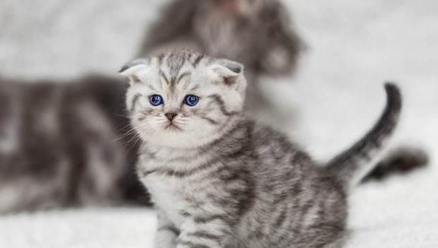 Maksud Onty, Ongkel, dan Tingkel di Komunitas Kucing