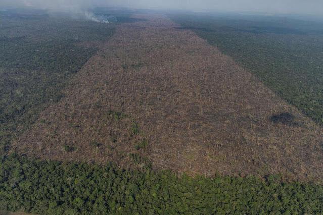 Pará é responsável por 39% do desmatamento na Amazônia