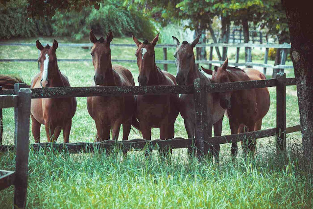 horses lined up along wooden fence - types of horse fencing