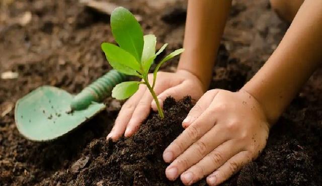 Inilah 3 Cara Melestarikan Alam Menurut Ajaran Islam