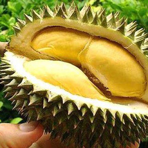 Trái sầu riêng chuẩn múi phải mọng và nhiều múi như thế này!