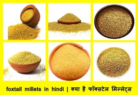 foxtail millets in hindi | क्या है फॉक्सटेल मिल्लेट्स