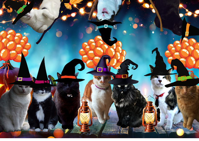 Halloween party for cats, cats dressed as wizards
