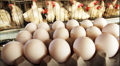 How to check Egg quality