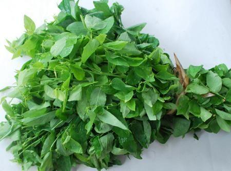 Chia sẻ 6 loại rau màu xanh đậm rất tốt cho người thiếu máu by BeeTechz