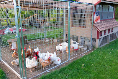How to start small scale Poultry Farm business
