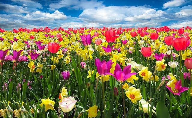 Pengertian Flora dan Persebaran Flora