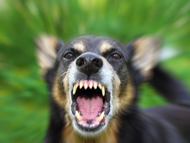 Why Do Dogs Bark For No Reason? And How To Deal With It