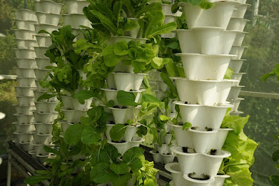 الزراعة المائية من خلال نظام الأبراج
