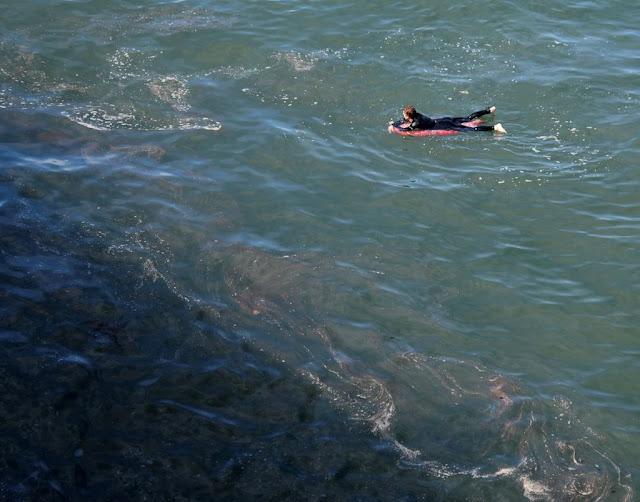 California Oil Spill Kills Fish, Damages Wetlands
