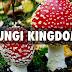 Organisms In Kingdom Fungi & Its Taxonomy