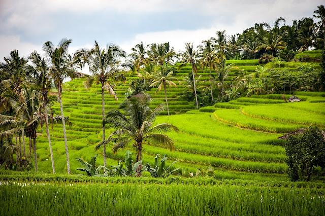 Sumber Daya Alam Hasil pertanian