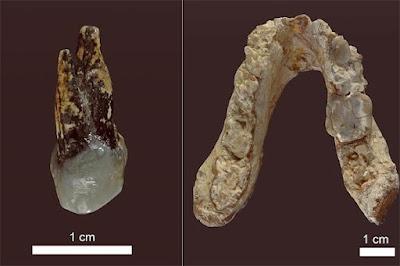 fossil fragments of Graecopithecus freybergi.