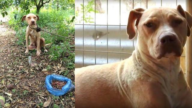 Σκυλίτσα έγκυος στο Ναύπλιο αφέθηκε δεμένη να πεθάνει - Γέννησε και κράτησε τα κουτάβια της ζωντανά