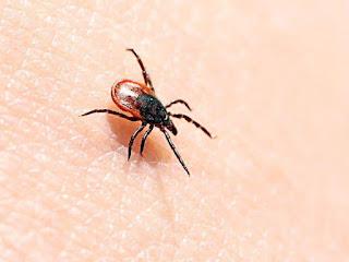 Gây sốc Virus Yezo Xuất hiện ở Nhật Bản, Đây là Căn bệnh Nó Gây ra
