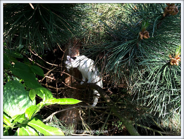 tripawed cat up a tree, 3 legged cat up a tree, cat in a tree, cat climbing a tree,