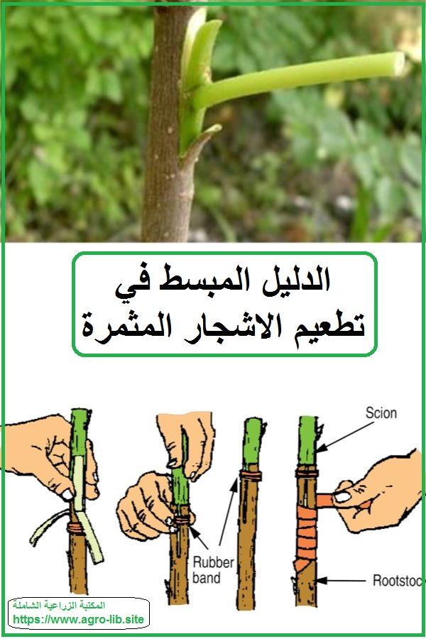 كتاب : الدليل المبسط في تطعيم الاشجار المثمرة