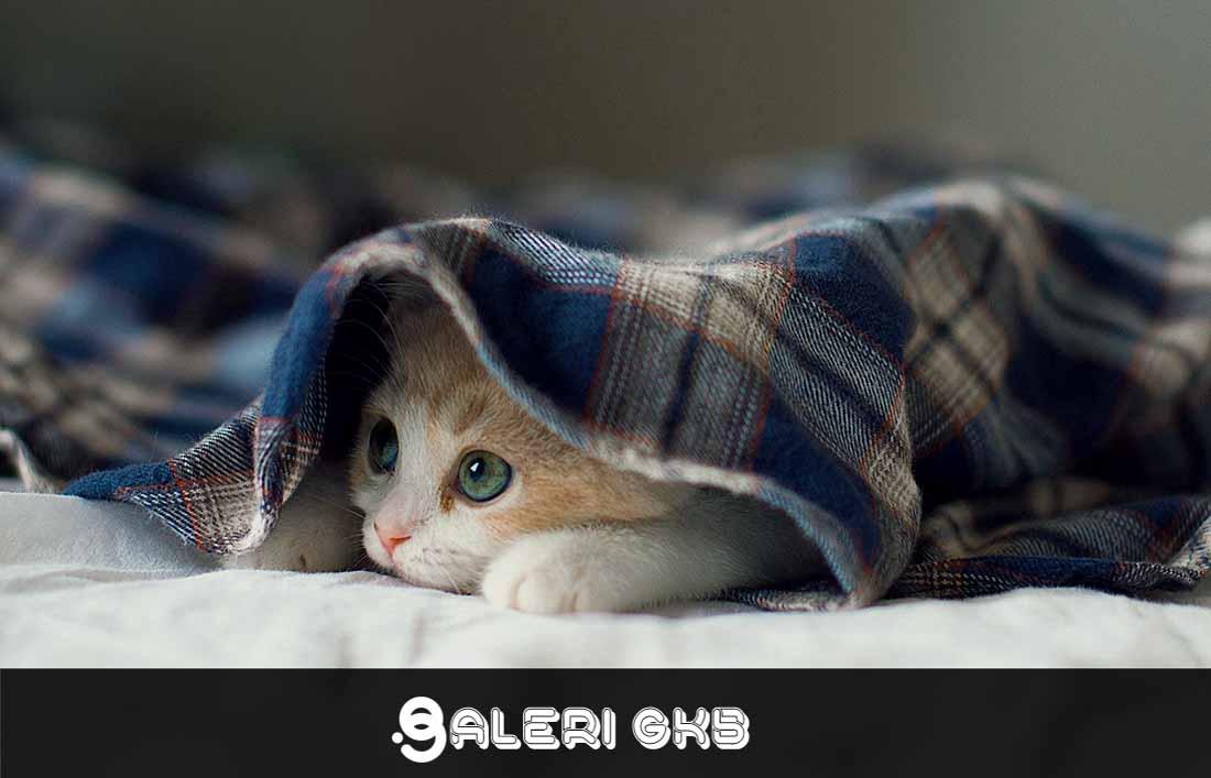 20 wallpaper image kitten, cat, cute, pet wallpaper, background Ultra HD 4K 5K Computer Desktop