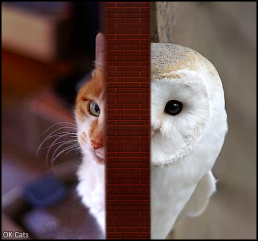 Photoshopped Cat picture • Cat and owl spying on each other. 'I can see you • Me too....' [ok-cats.com]