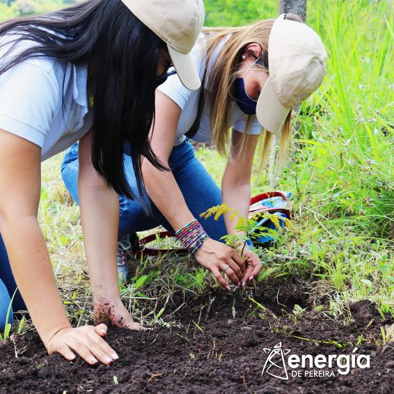 Energía de Pereira celebró el Día del Árbol