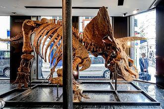 Expo : Big John, un Tricératops aux enchères, les spectaculaires fossiles de la vente Naturalia, orchestrée par la maison Binoche et Giquello - Jusqu'au 15 octobre 2021