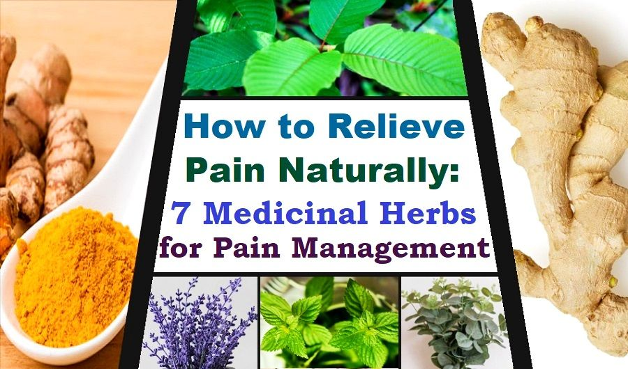 Medicinal Herbs for Pain Relief