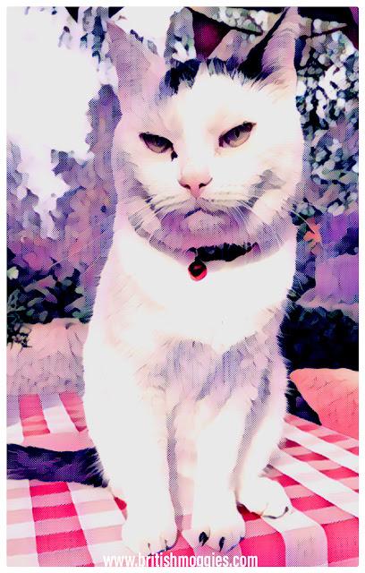 cat art. cute cat, 3 legged cat, smooch, cat in the garden,