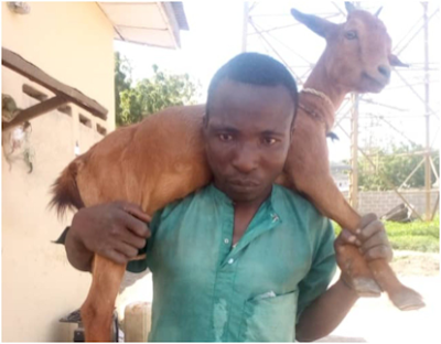 Man arrested for alleged goat theft in Kwara