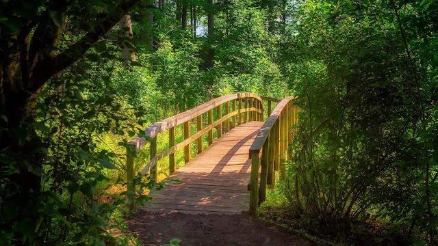 Bridge, forest, trees, nature wallpaper
