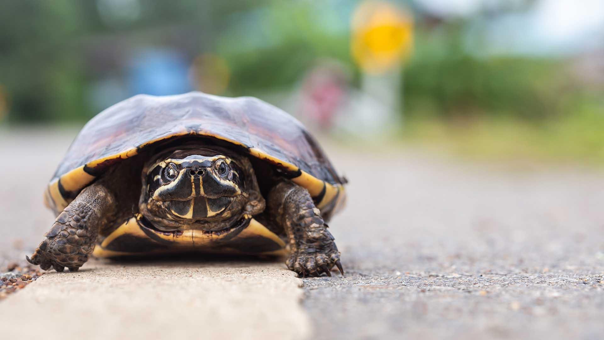Masaalah Loading Blog Slow Ni Makin Menjadi-Jadi!