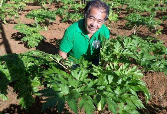 Pulau Lombok selain terkenal dengan destinasi wisata alam, beragaman budaya serta kesohoran kulinernya, ternyata menyimpan kekayaan lain di bidang minuman herbal yang kaya manfaat bagi tubuh. Jika di provinsi jawa barat tercatat sebagai penghasil teh terbesar indonesia, lombok memiliki teh khas lombok yang juga sejak lama sudah terkenal.