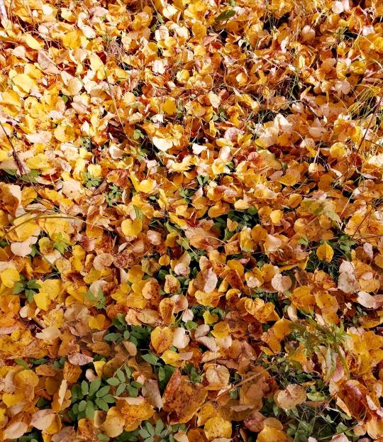 золотая листва осени