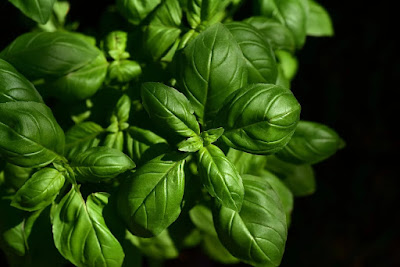 Difference Between Parsley And Basil