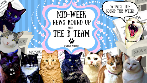 Cats Banner, The B Team, cats, cute,
