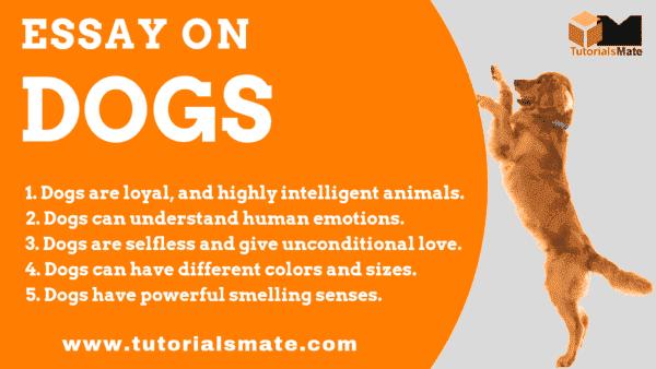 Essay on Dogs