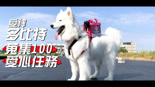 楊時修帶著愛犬「多比」跑遍台灣集結百人祝福,過程被拍攝成影片