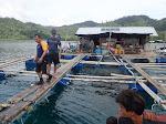 Peluang Usaha Budidaya Lobster di Kabupaten Nias Utara Cukup Besar