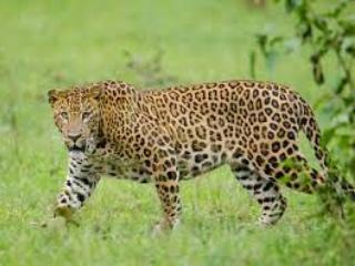 Wild Animals In Marathi