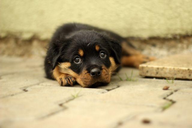 Pulgas e carrapatos: pesadelos para cães e tutores. Mas é possível resolver esse problema