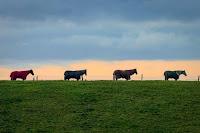 Four Horses Photo by David Wheater on Unsplash