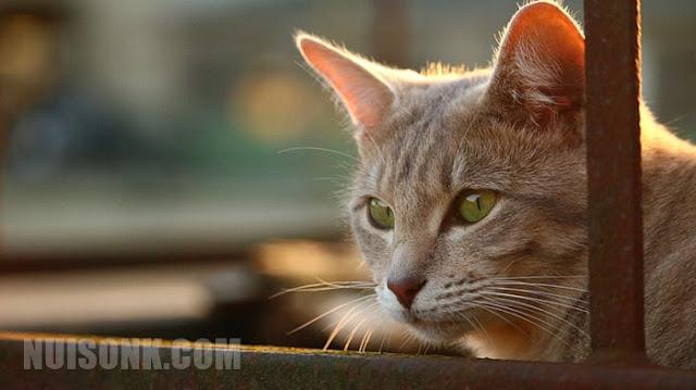 4 Jenis Kucing Termahal di Dunia