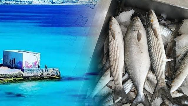 رجيش : تكوين هيئة متكونة من البحارة تحدد طريقة صيد المجل
