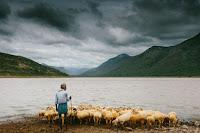 Shepherd - Photo by joseph d'mello on Unsplash