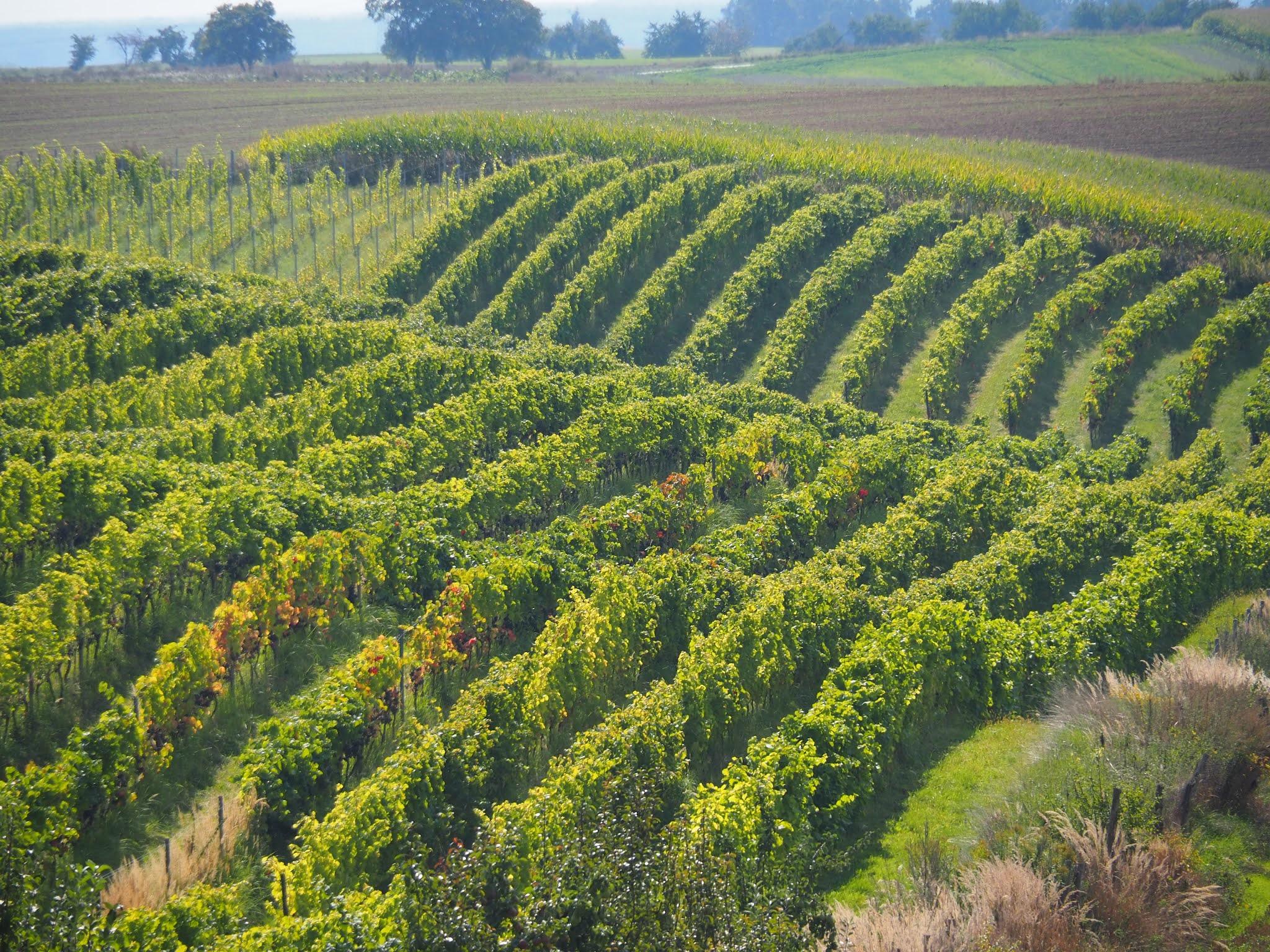 Dolnośląski Szlak Piwa i Wina - odkrywamy Dolny Śląsk