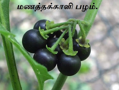Black nightshade fruit